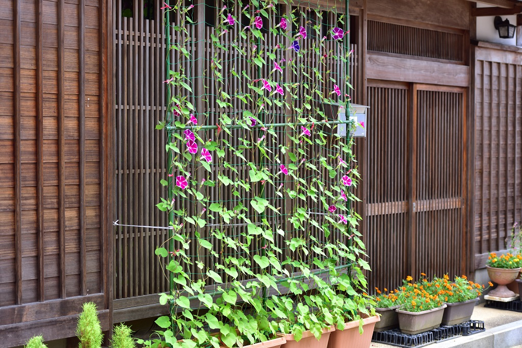 京町家 長屋の軒先とアサガオ