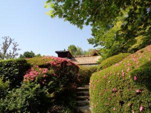 詩仙堂庭園 サツキ