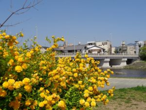 鴨川 北大路橋