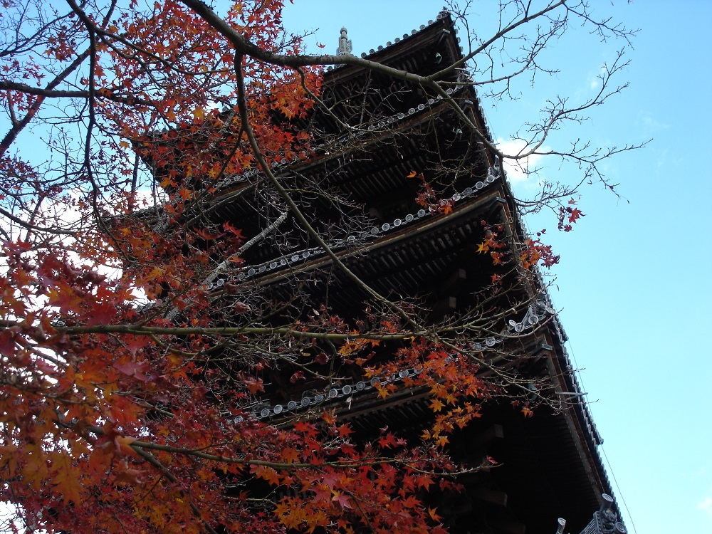 仁和寺 五重の塔ともみじ