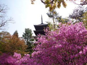 仁和寺 五重の塔とミツバツツジ