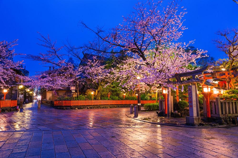 京都 祇園の辰巳大明神 桜