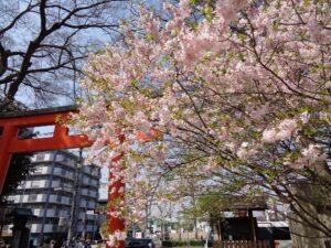 平野神社 鳥居前 桜