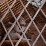 京都 幸神社の神猿