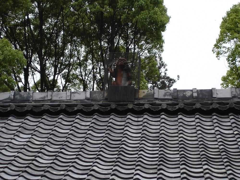 京都 赤山禅院の猿