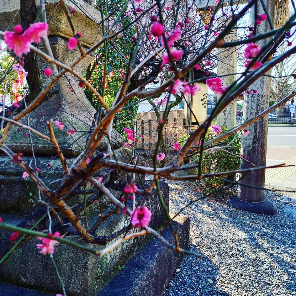水火天満宮 早春に訪れた際の梅
