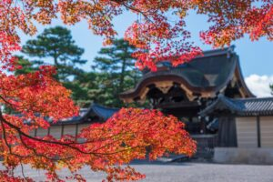 京都御所 建春門前の紅葉