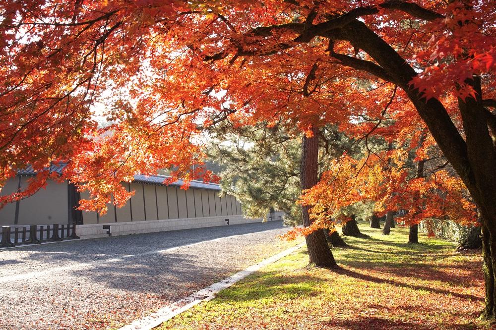 京都 御所の紅葉