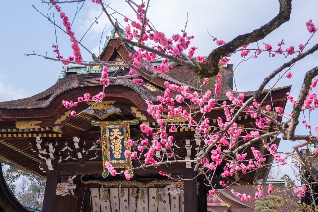 京都 北野天満宮 紅梅