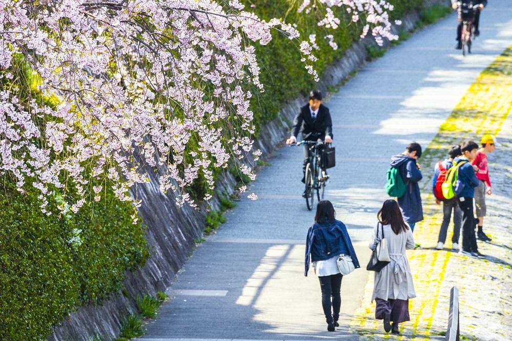 京都 桜の風景